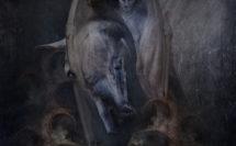 création graphique le diable et cheval