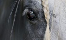 Brillante Eye, photodine64 equus eyes collection