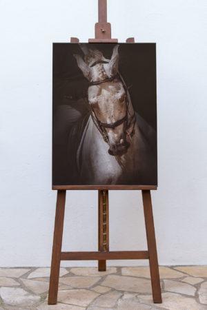 photodine64-brioso-expo