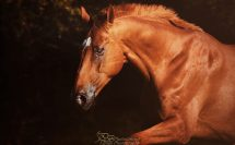photodine64 equus natural