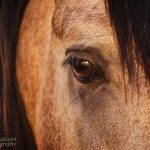 Equus Eyes Collection