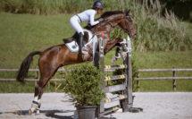 cheval qui saute un obstacle en concours
