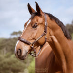 photodine64 equestrian collection