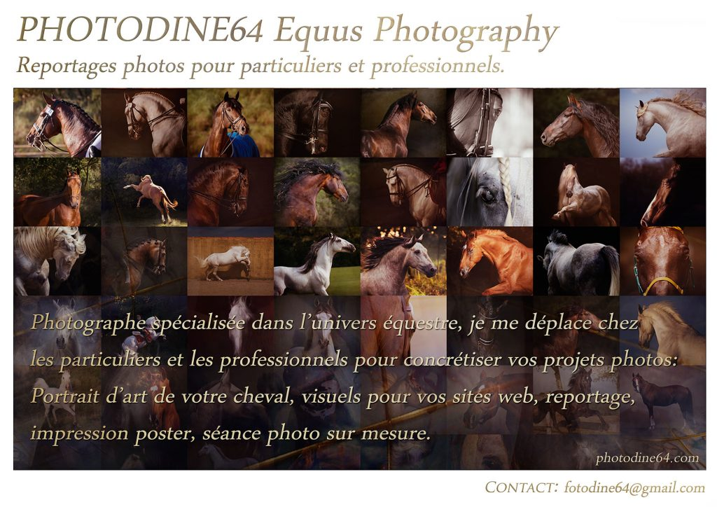 Photodine64 reportages