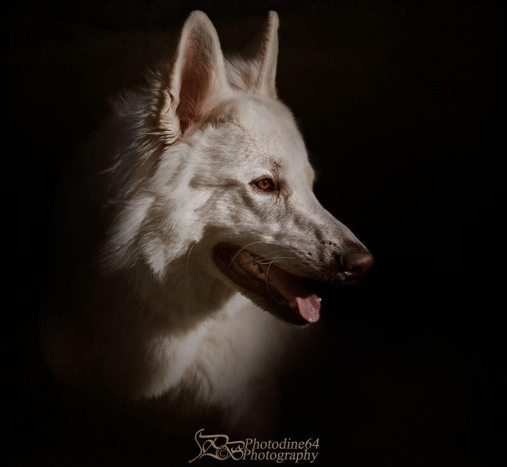 wolf shadow photodine64 photography