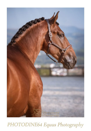 photodine64-el-rey