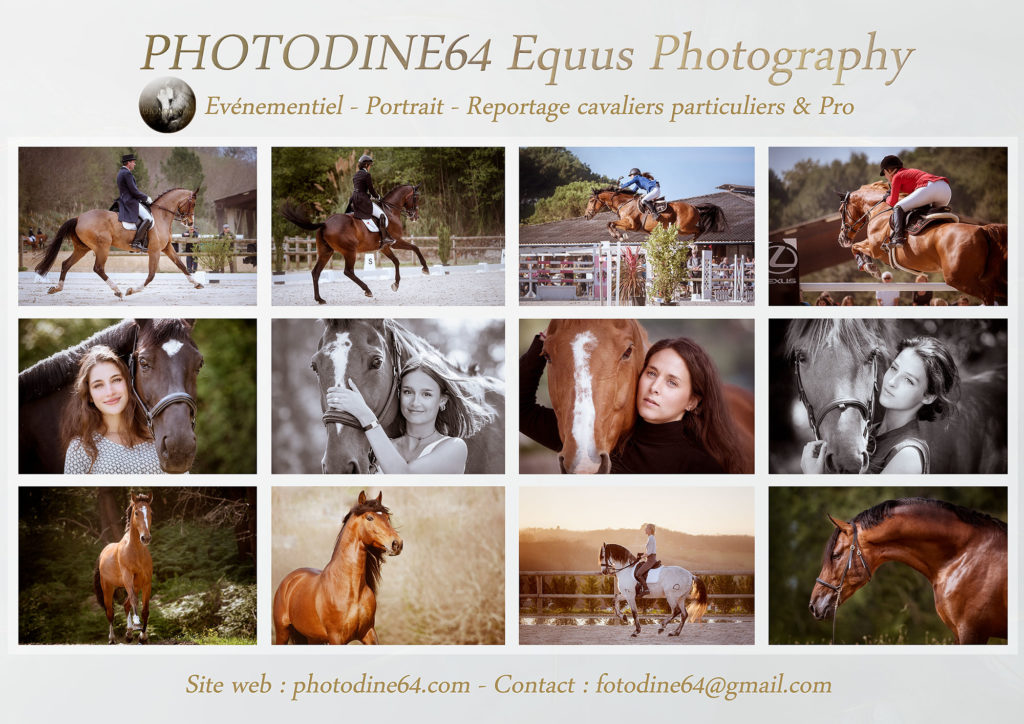 photodine64-equus collection-1