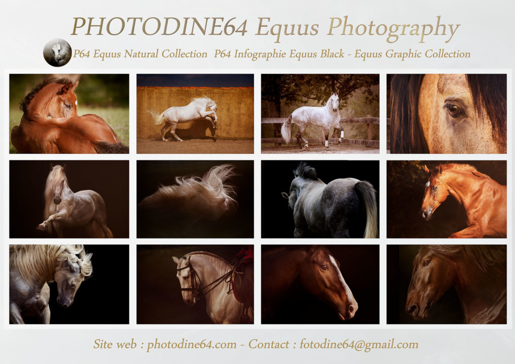 photodine64-equus collection-2