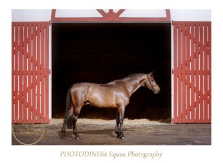 photodine64-las-jump-02