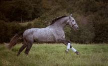 cheval gris au galop dans un pré