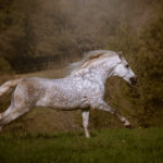 Equus News 2020